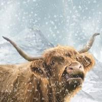 Highland Cow 1 Fine-Art Print