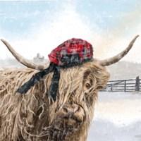 Highland Cow 2 Fine-Art Print