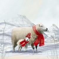 Sheep Red Scarf Fine-Art Print