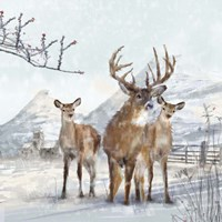 Stag And Females Fine-Art Print