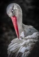 The Stork Fine-Art Print