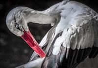 The Stork III Fine-Art Print