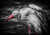The Stork IV Fine-Art Print
