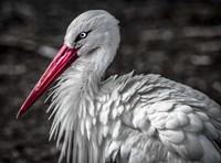 The Stork V Fine-Art Print