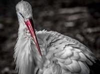 The Stork VI Fine-Art Print