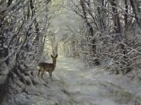 Winter Path Fine-Art Print