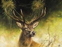 Antlers Fine-Art Print