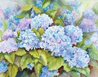 A Cluster of Hydrangeas Fine-Art Print