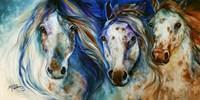 3 Wild Appaloosa Horses Fine-Art Print
