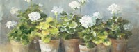 White Geraniums v2 Fine-Art Print