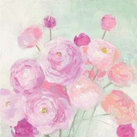 Soft Ranunculus Fine-Art Print