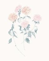 Flowers on White VI Contemporary Fine-Art Print