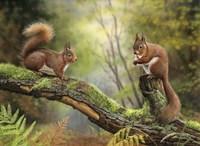 Red Squirrels Fine-Art Print