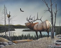 Bugling Elk Fine-Art Print