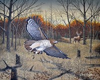 Red-Tailed Hawk Fine-Art Print
