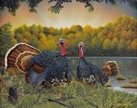 Turkey Season Fine-Art Print