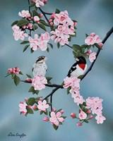 Red-breasted Grosbeaks Fine-Art Print