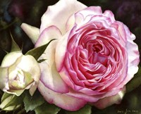 Eden Rose With Bud Fine-Art Print