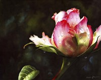Pink Rose Bud With Dewdrops Fine-Art Print