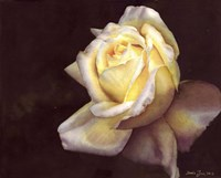 Rose Elfe Fine-Art Print