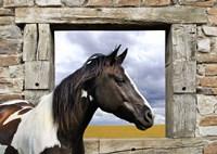 Painted Horse Fine-Art Print