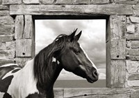Painted Horse (BW) Fine-Art Print
