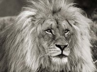 King of Africa Fine-Art Print