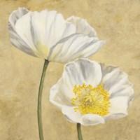 Poppies on Gold II Fine-Art Print
