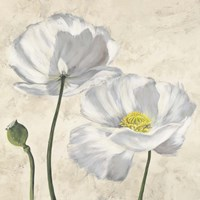 Poppies in White I Fine-Art Print