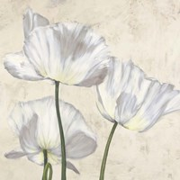 Poppies in White II Fine-Art Print