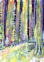 Redwoods Road Trip Fine-Art Print
