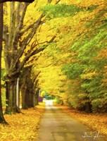 Autumn Gold Fine-Art Print