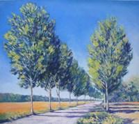 Picardy Poplars IV Fine-Art Print