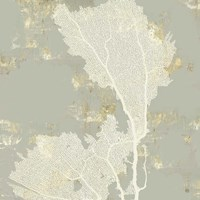Sea Coral II Framed Print