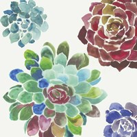 Water Succulents I Fine-Art Print