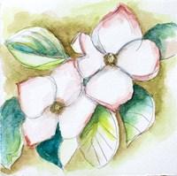 Watercolor Dogwood Fine-Art Print