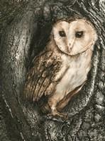 Barn Owl Roost Fine-Art Print