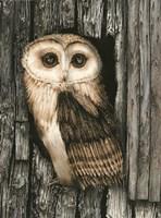 Owl Sentry Fine-Art Print
