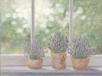 Lavender Pots Fine-Art Print