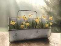 Daffodil Tin Fine-Art Print