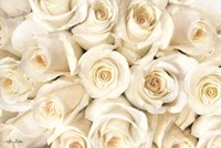 Top View - White Roses Fine-Art Print