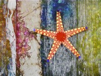 Starfish 1 Fine-Art Print
