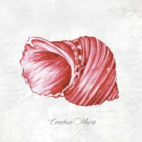 Red Seashell Fine-Art Print