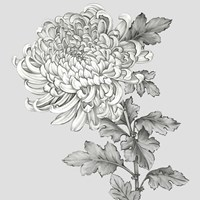 Grey Botanical I Fine-Art Print