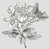 Grey Botanical II Fine-Art Print