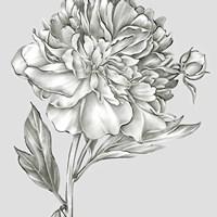 Glorious Peony I Fine-Art Print
