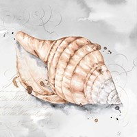 Blush Shell I Fine-Art Print