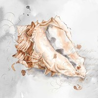 Blush Shell III Fine-Art Print