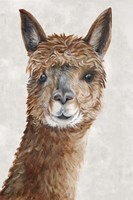 Suri Alpaca II Fine-Art Print