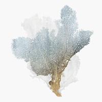 Delicate Coral III Fine-Art Print